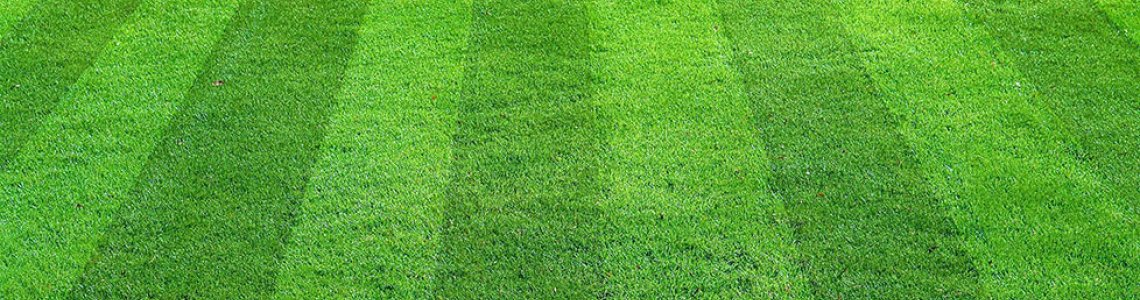 How to sow and care for your Lawn