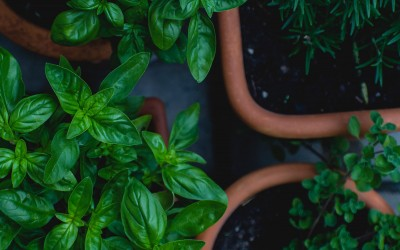 Our How To Guide On Growing Herbs