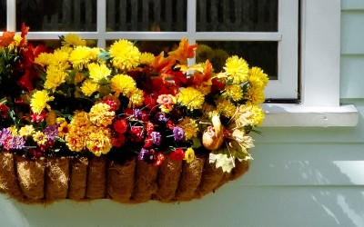 Our How To Guide On Hanging Baskets