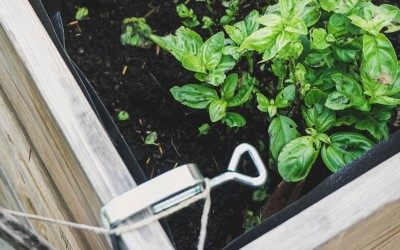 Our How To Guide On Raised Garden Beds & Planter Boxes
