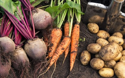 Your March 2021 Gardening Guide