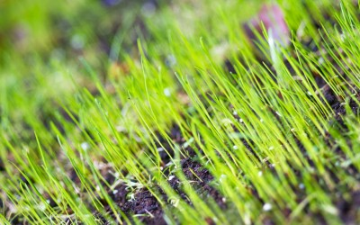 Tips for keeping birds off your lawn and away from your seed!