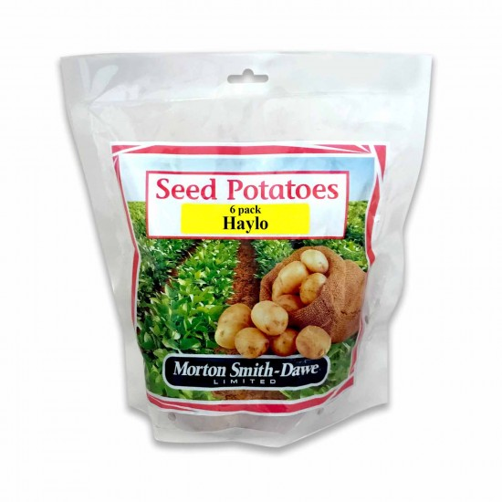 Seed Potatoes Haylo 6 Pack