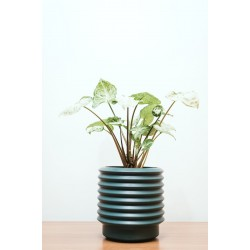 Berlin Medium Planter Teal