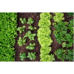 Intelligro Vegetable Gardening for Beginners Workshop | Thursday 20th August 2020