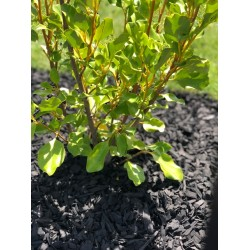 Black Beauty Mulch