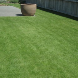 Lawn Topdressing Mix