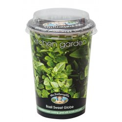 Kitchen Herb Pot Basil